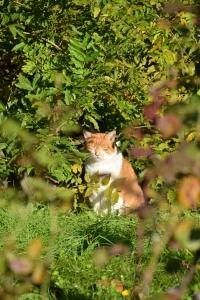 Cat In The Morning Sunlight