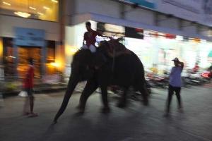 Street Elephant, Surin, Thailand