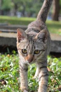Lumpini Park Cat, Bangkok, Thailand