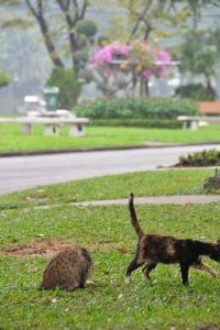 Lumpini Park Cats, Bangkok, Thailand
