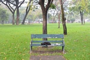 Lumpini Park Cat on the Bench