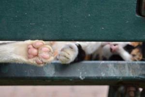 Lumpini Park Cat Paw, Bangkok, Thailand