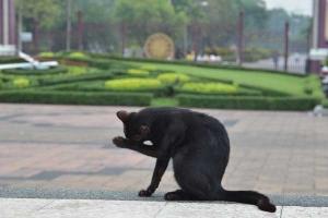 バンコク ルンピニ公園の猫