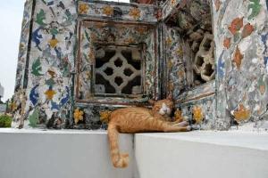 Temple Cat, Bangkok, Thailand
