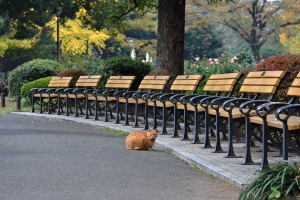 Ai-chan The Cat, Autumn Park, Tokyo