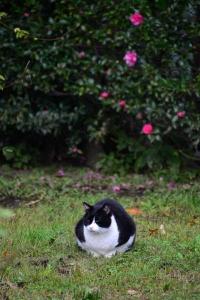 Cat and Sasanqua Flowers