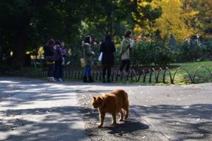 Ai-chan The Cat Patrolling
