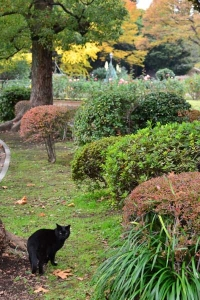A Black Cat in Autumn