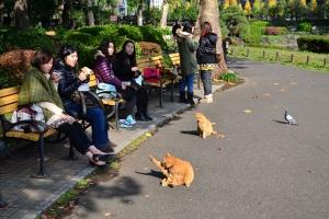Tokyo Park Cats - Ai-chan and His Mate