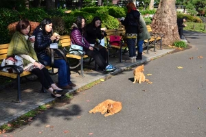 Tokyo Park Cats - Ai-chan and His Mate
