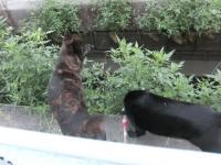 ネコだっしゅ2