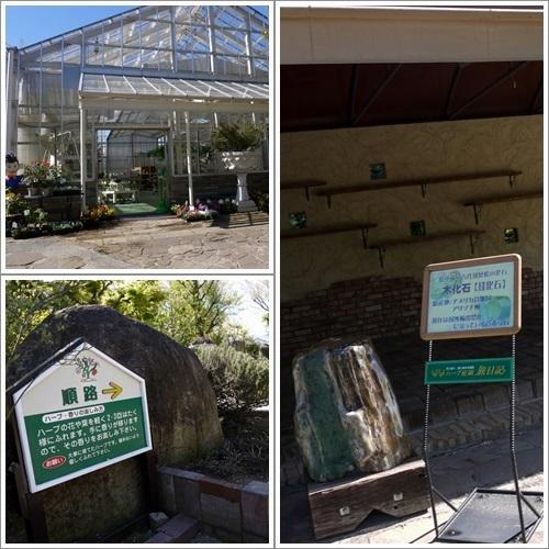 ハーブ庭園5