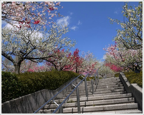 フルーツ公園9