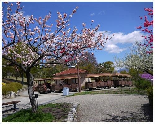 フルーツ公園16