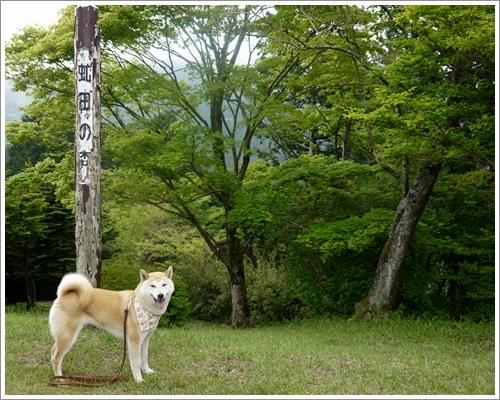 やすらぎの森14