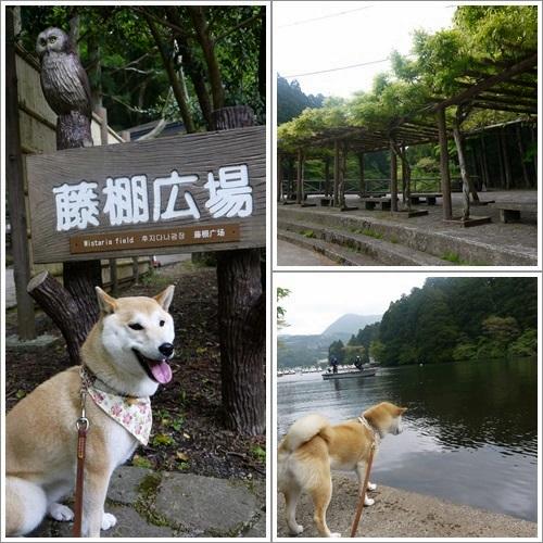 恩賜箱根公園19