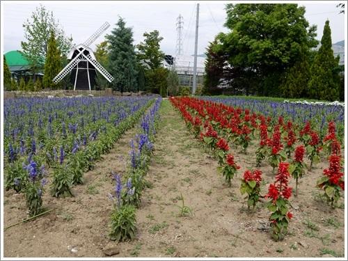 ハーブ庭園 5月 6