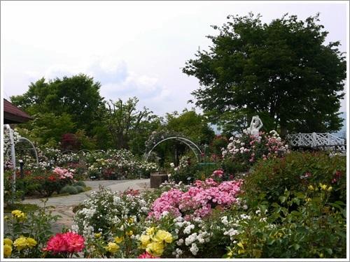 ハーブ庭園 5月 9