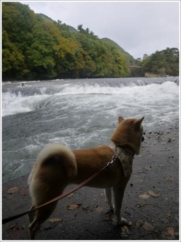 吹割の滝11