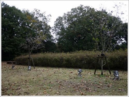 森林公園12 さくら
