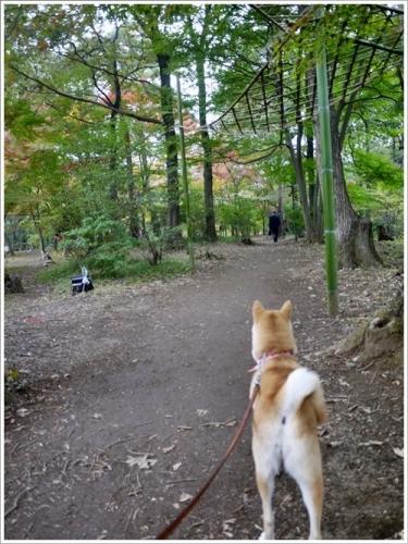 森林公園20