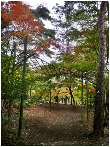 森林公園22