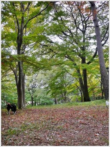 森林公園23