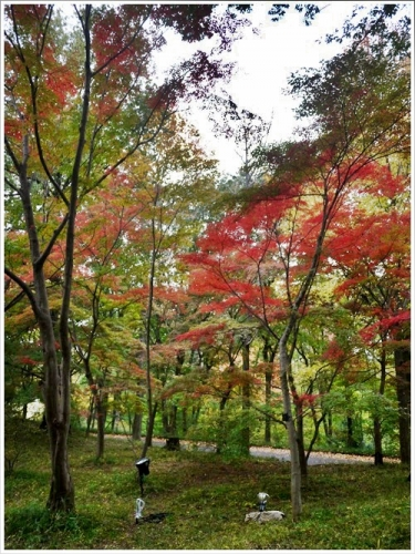 森林公園25
