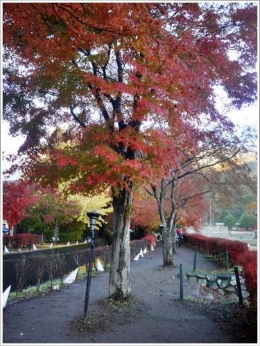河口湖紅葉祭り5