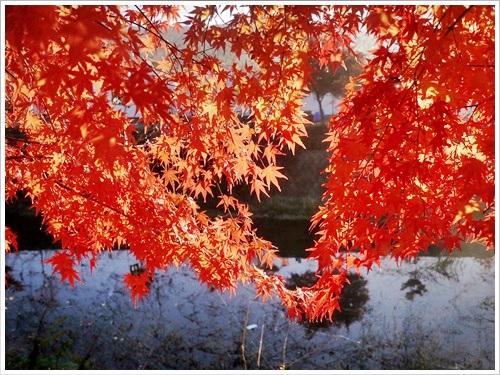 河口湖紅葉祭り41
