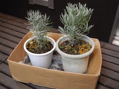 20131118鉢植え
