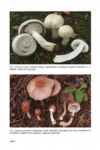 Fungi_Europaei_Vol_1A_Agarics_Supp2.jpg
