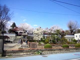 20130413桜(その2)