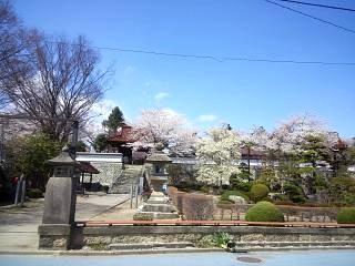20130413桜(その3)
