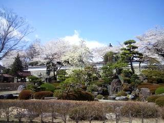 20130413桜(その4)