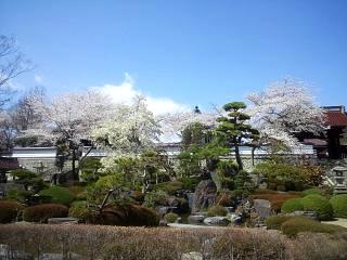 20130413桜(その5)