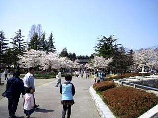 開成山公園・大神宮の桜(その2)