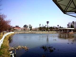 開成山公園・大神宮の桜(その5)