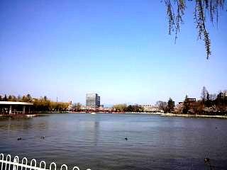 開成山公園・大神宮の桜(その9)