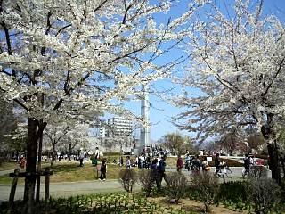 開成山公園・大神宮の桜(その13)