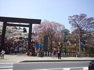 開成山公園・大神宮の桜(その14)