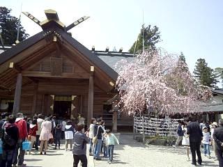開成山公園・大神宮の桜(その17)