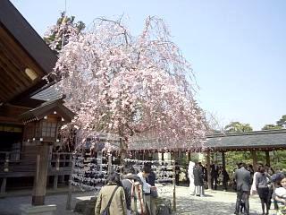 開成山公園・大神宮の桜(その19)