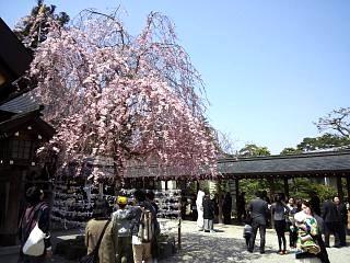 開成山公園・大神宮の桜(その20)