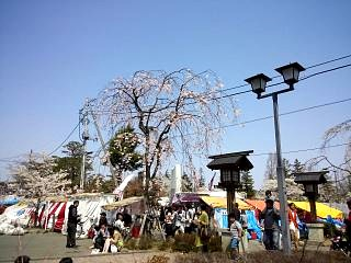 開成山公園・大神宮の桜(その30)