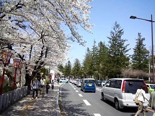 開成山公園・大神宮の桜(その31)
