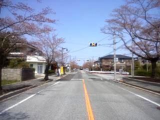 夜の森桜(その2)