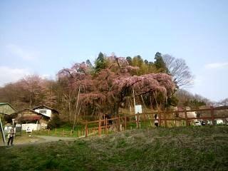 紅枝垂地蔵堂桜(その1)