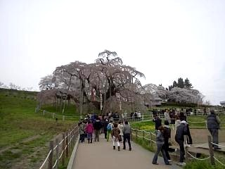 20130420三春滝桜(その2)