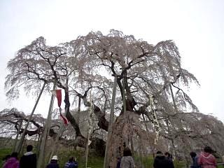 20130420三春滝桜(その4)